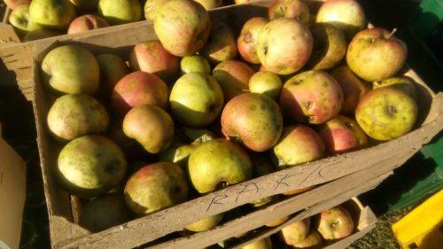 Proređivanje plodova jabuke