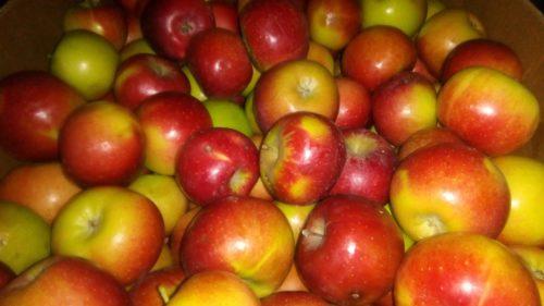 Dve jabuke dnevno…