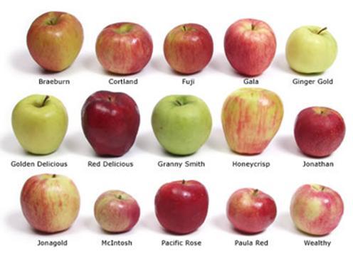 Jabuka dnevno, drži doktora daleko